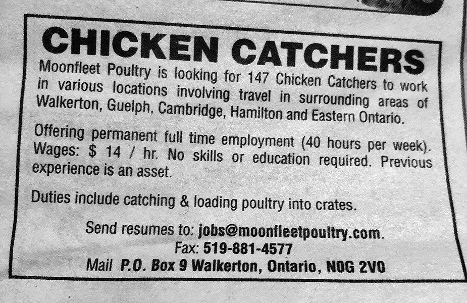 Chicken Catchers